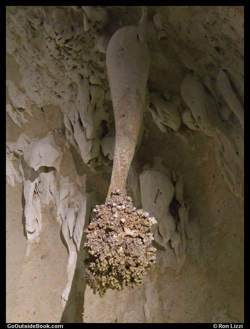 Lion's Tail - Carlsbad Caverns National Park, New Mexico