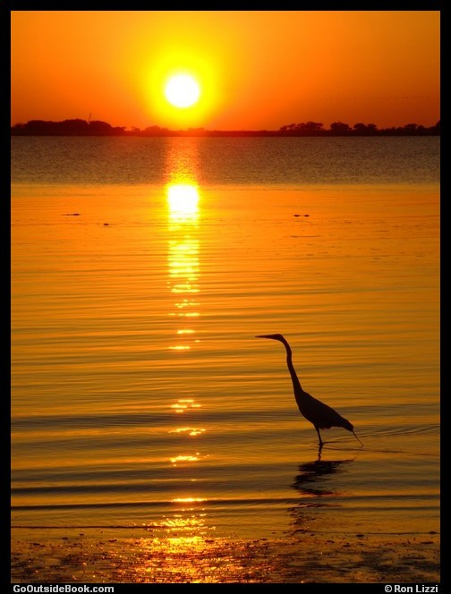 Egret at sunset on Jekyll Island, Georgia