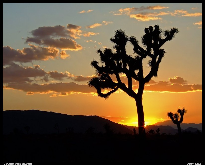 Scenes From Joshua Tree National Park California Go