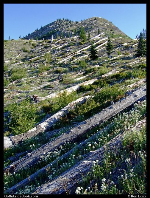 Independence Pass Trail 1 - Mount St. Helens